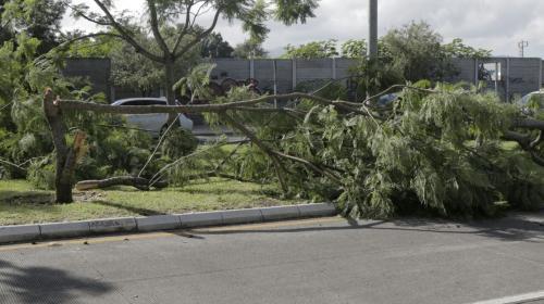 Municipalidad de Guatemala pedirá castigo contra taladores de árboles