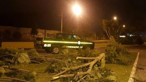 Desconocidos cortan más de 40 árboles cerca del aeropuerto La Aurora
