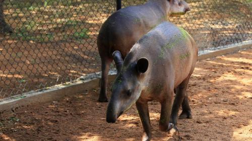 Venezolanos estarían robando animales de zoológicos para poder comer