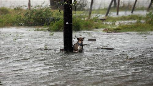 Rescatan a perro tras ser abandonado por su dueño en el huracán Harvey