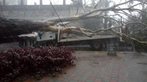 Lluvias derriban dos árboles y complican el tránsito en la ciudad