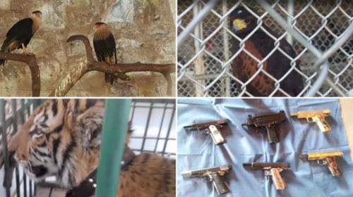 """Pistolas bañadas en oro y un zoológico en finca del narco """"don Chelo"""""""