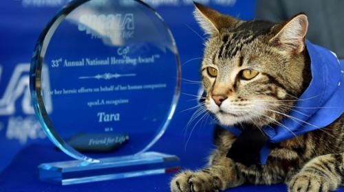 Una gata que salvó a su dueño participará en el Desfile de las Rosas