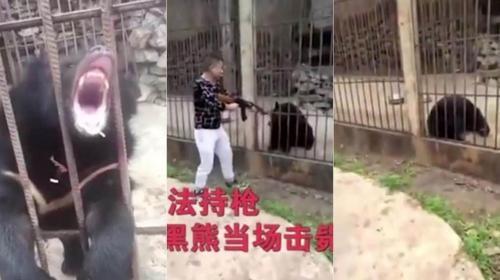 Turista chino comete atroz crimen contra oso en peligro de extinción
