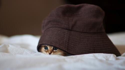 ¡Encuentra al gato! El nuevo reto viral