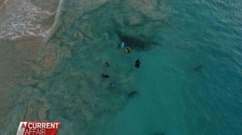 Graban a varios tiburones merodeando a grupo de niños en Australia