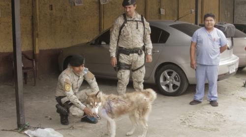 PNC rescata a un perro luego de una denuncia por maltrato animal