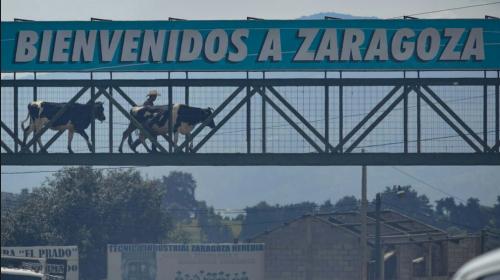 ¡Hasta las vacas usan la pasarela! La foto de Zaragoza, Chimaltenango