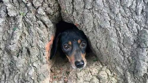 Mira cómo fue el rescate de un perro dentro de un árbol