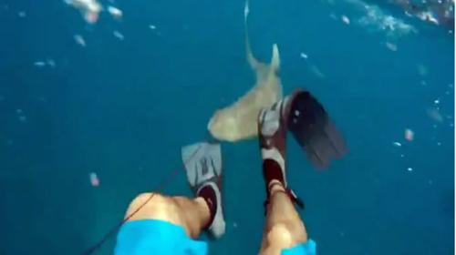 Pescador graba el aterrador momento en que fue mordido por un tiburón