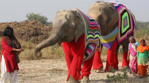 ¿Pijamas para elefante? Así protegen a estos animales de ola de frío