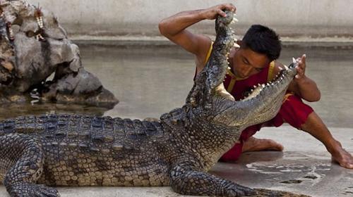 Hombre mete su cabeza a la boca de un cocodrilo y pasa algo inesperado