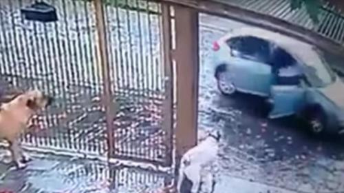 Dos perros evitan que su dueño sea secuestrado