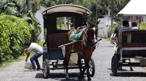 Antigua Guatemala prohíbe carruajes jalados por caballos