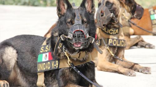 Narcotraficantes amenazan de muerte a los perros policía mexicanos