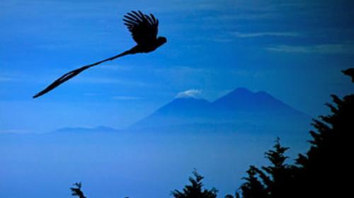 Fotógrafo guatemalteco realiza película acerca del Quetzal