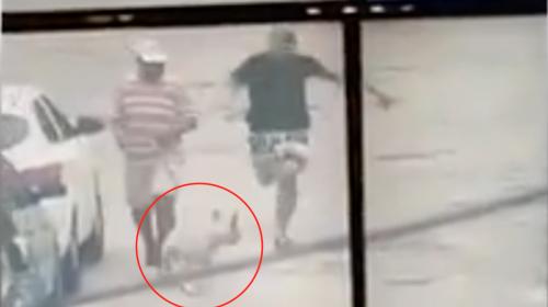 Un perro se convirtió en héroe al detener a un sospechoso en Brasil