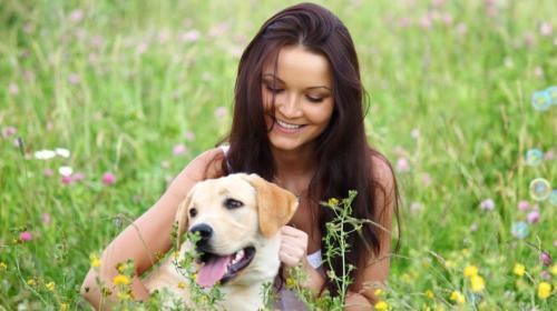 """Los perros pueden """"hablar"""" con los humanos, según estudio científico"""
