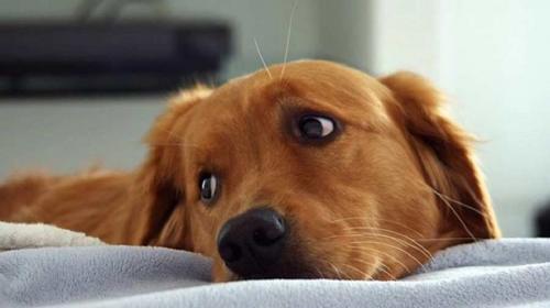 La historia del perro que no dormía por temor a que lo abandonaran