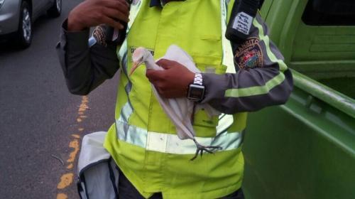 Agente de la PMT rescata a una garza que se enredó en un barrilete