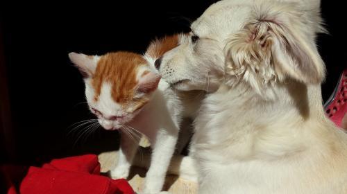 ¿Gato o perro? Este estudio demuestra cuál es el más inteligente