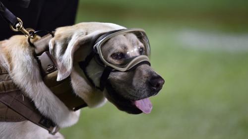 Frida, la perra rescatista, recibe homenaje de la selección mexicana