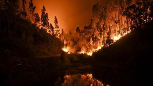Incendios dejan 31 muertos y más de 50 heridos en Portugal