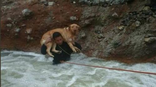 "La historia de ""Estrellita"", la perrita rescatada en un río"