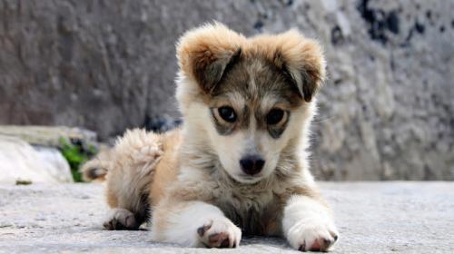 Esto intentan decirnos los perros con sus expresiones faciales