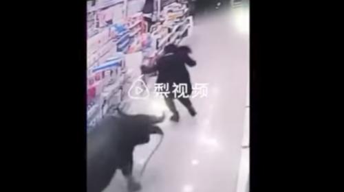 Búfalo ataca a una mujer embarazada dentro de un supermercado