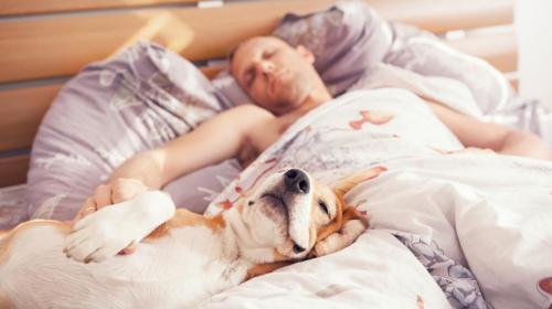 ¿Afecta a tu sueño dormir con el perro en la cama?