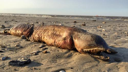 La verdad de la criatura marina que aterró a las personas en Texas