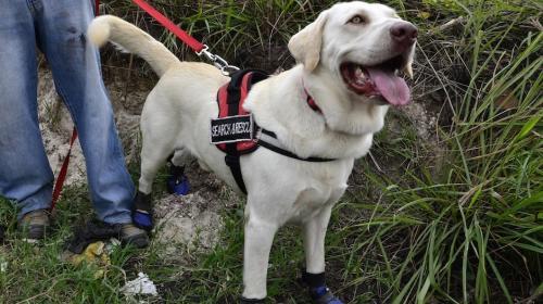 Drago no podrá viajar y ayudar a las víctimas del terremoto de México