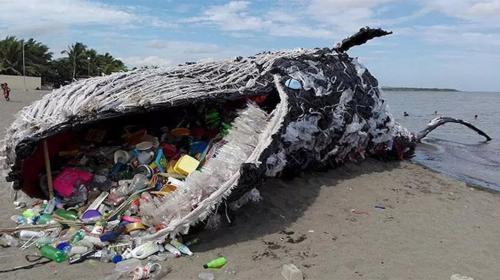 La verdadera historia detrás de la ballena muerta por plástico