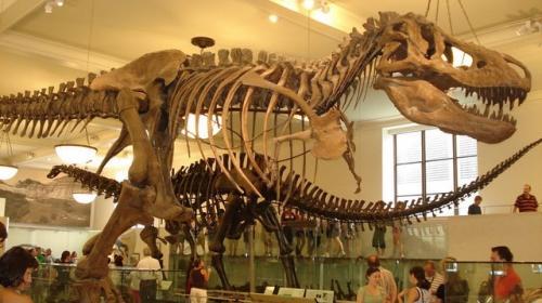 ¡Subasta prehistórica! Más de 2 millones por fósiles de dinosaurios