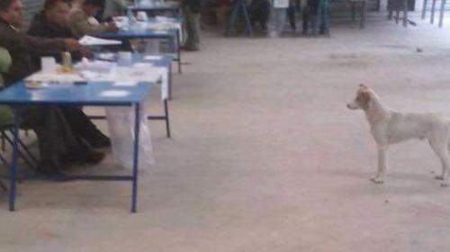 Estos curiosos visitantes se presentaron a los centros de votación