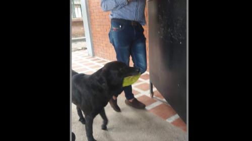 La historia del perrito que lleva a la tienda una hoja para comprar