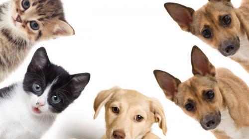 En diciembre sube el número de mascotas desaparecidas