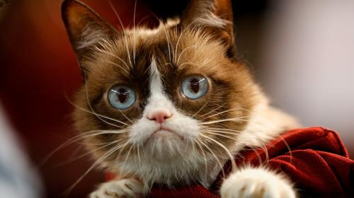 """""""Grumpy Cat"""" gana jugosa demanda contra una marca de café"""