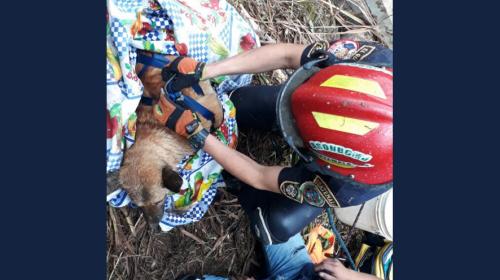 Vecinos y bomberos rescatan a perro que cayó a un pozo en Quiché