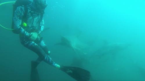 Video: impactante momento en el que un tiburón ataca a un buceador