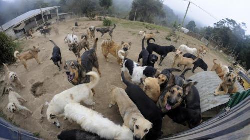Esto es lo que debes saber de la nueva ley que protege a los animales