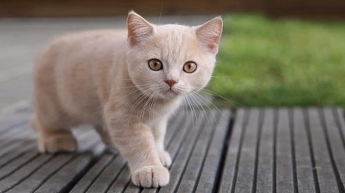 ¿Sabes lo que dice el lenguaje corporal de los gatos?
