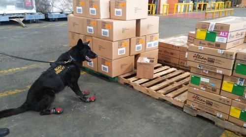 Nero, el perro con zapatos que localizó droga en cajas de condimentos