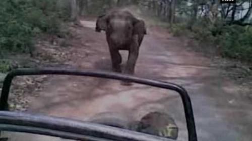 Watch: Elephant chases away tourist jeep - ANI News