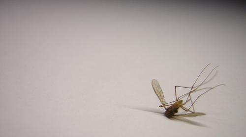 Algunos trucos para alejar a esos molestos mosquitos