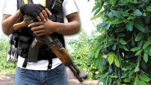 Auge en México de campos de aguacate para ocultar narcolaboratorios