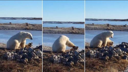 La verdad detrás del video de un oso polar acariciando a un perro
