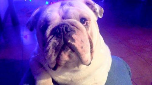 """Se busca a """"Lucas"""", el perrito que fue robado de su casa en Amatitlán"""