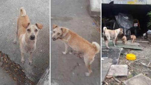 Un perro conmueve al recolectar comida para cachorros